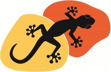 logo GECKO CLUB - CLUB ESCALADE